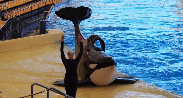Orca Ocean - Whale Show